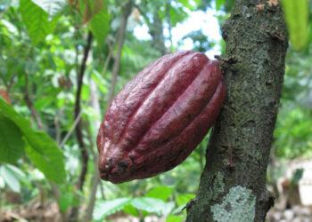 Tree-to-bar : Un chocolat de qualité supérieure pour se faire plaisir en toute conscience.
